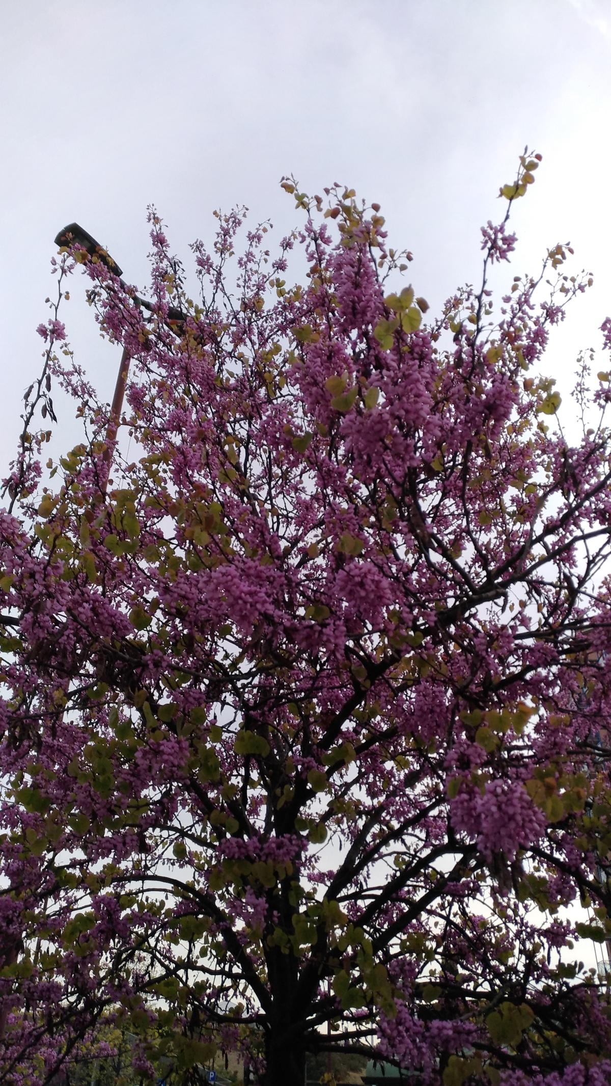 E' primavera